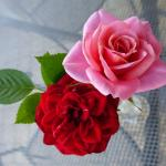 aaa mes roses rouges roses-001