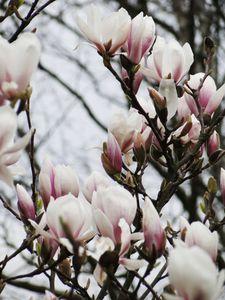 printemps_2010_002