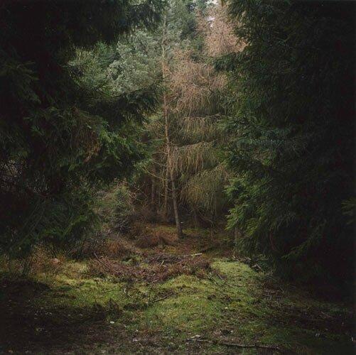 daniel-gustav-cramer-woodland-05-domobaal
