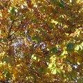 L'automne au bord du lac Léman 051