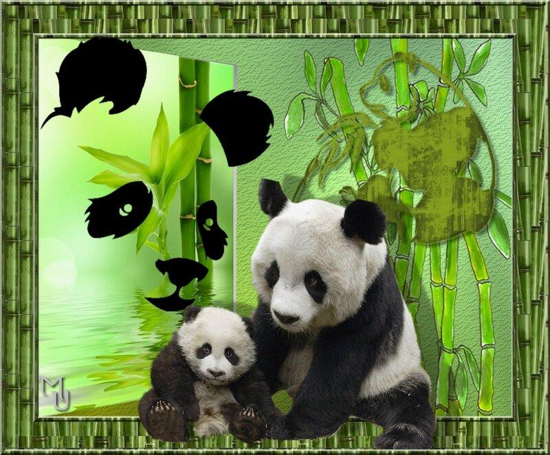 Sauvons les Pandas