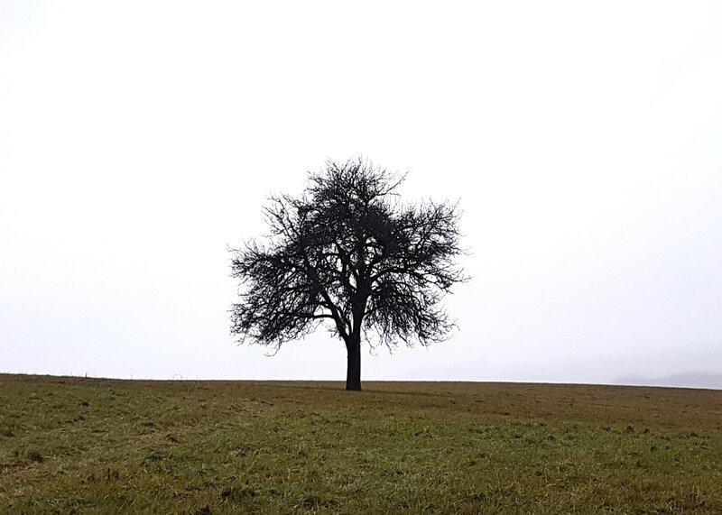 arbre 04 01 2017