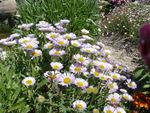 parterre_de_fleurs_1