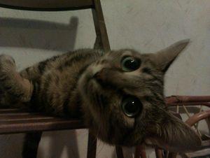 kenshin sur chaise