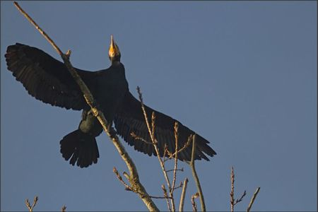 ville lulu cormoran ailes 201111