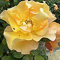 fleurs-roses-2 (1)