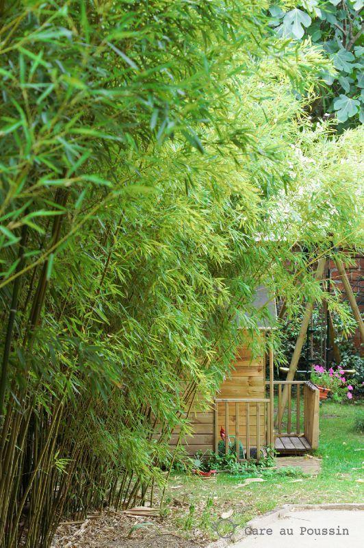 La cabane derrière les bambous