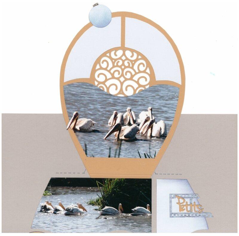 pelicans blancs 2