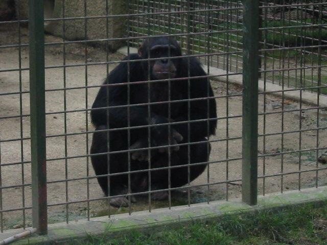 zoo plaisance du touch album photos maternelle jacques brel. Black Bedroom Furniture Sets. Home Design Ideas