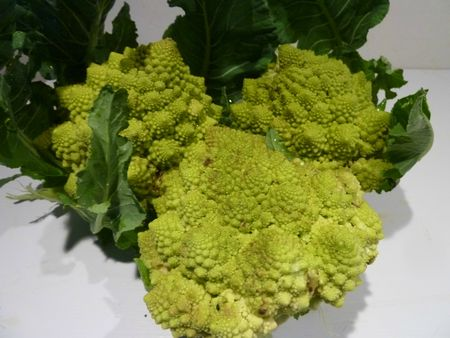 4-CHOUX ROMANESCO (23)