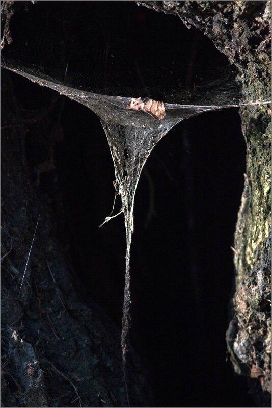 toile araignée eclairée arbre 281216