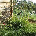 jardin et animaux...