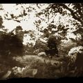Au jardin d'Albert Kahn