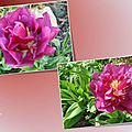 tulipes 2015_03_11