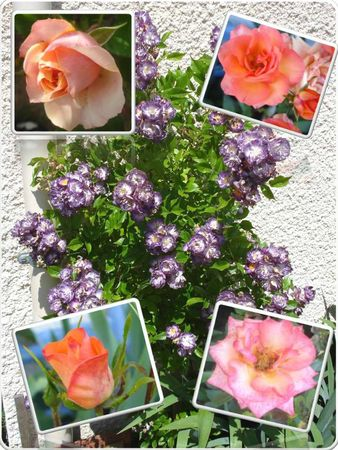 Fleurs 2009-2010 (40)