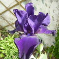 fleurs encore