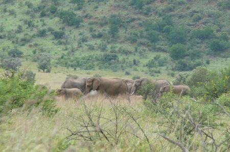 elephants_troupeau_1
