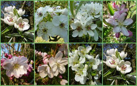 fleursdefruitiers