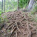 Des racines et des ailes...