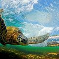 Tortue de mer