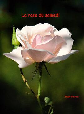 La rose du samedi N°10