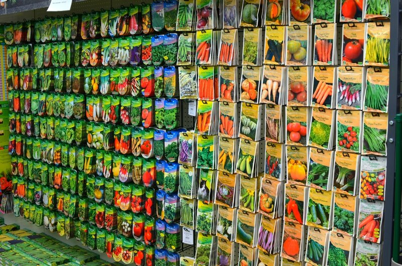 Cotineaster acheter en jardinerie en mars mes petits for Jardinerie correspondance