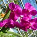 Chiang Mai - Orchid Farm