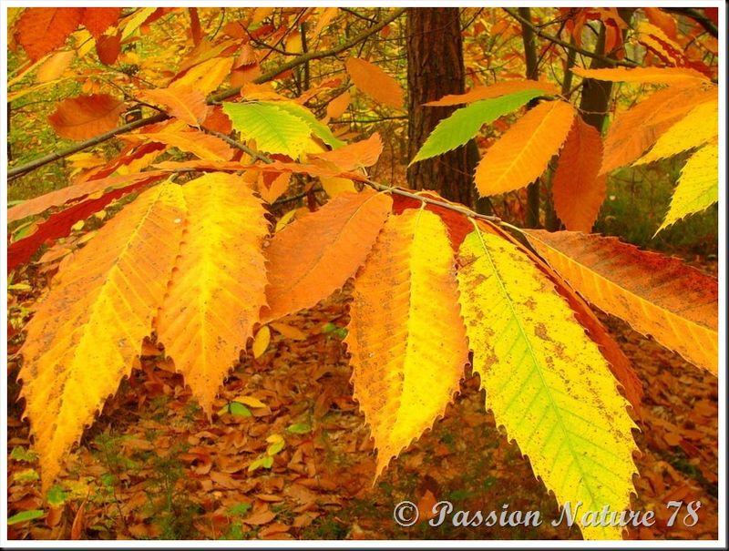 La forêt aux couleurs d'automne (17)