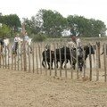 Camargue ADEPA 096