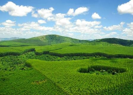 forests, plantations and land owned by SE