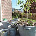 Dans mon jardin #10