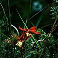 Profitons du soleil bien présent en ce mois d'avril pour immortaliser quelques jolies fleurs printanières ...