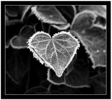 coeur_de_glace