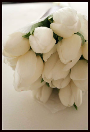 tulipes_blanches_3