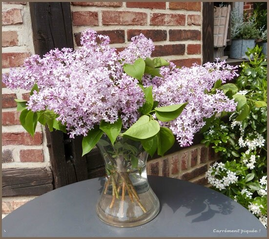 lilas-papy