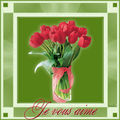 Langage tulipe rouge