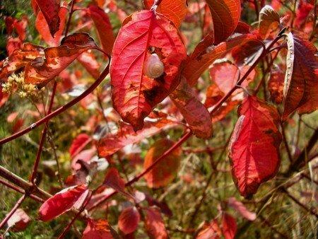 couleurs_automne004_600