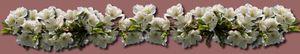 fleurs_de_cerisiers