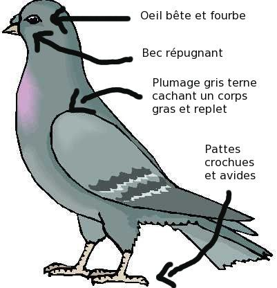 Coupe_pigeon