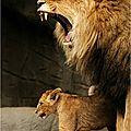 lionOH1rw6hhbo1_500