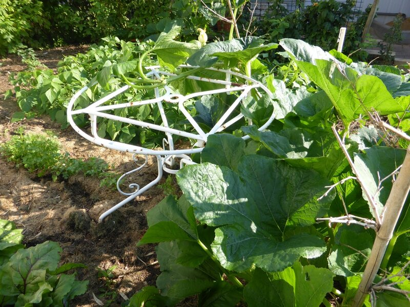 4-courgettes (6)