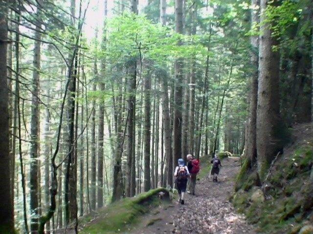 Descente en forêt