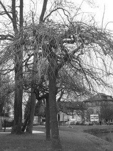 arbre_440x330