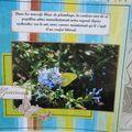 Guadeloupe Faune et Flore (16)
