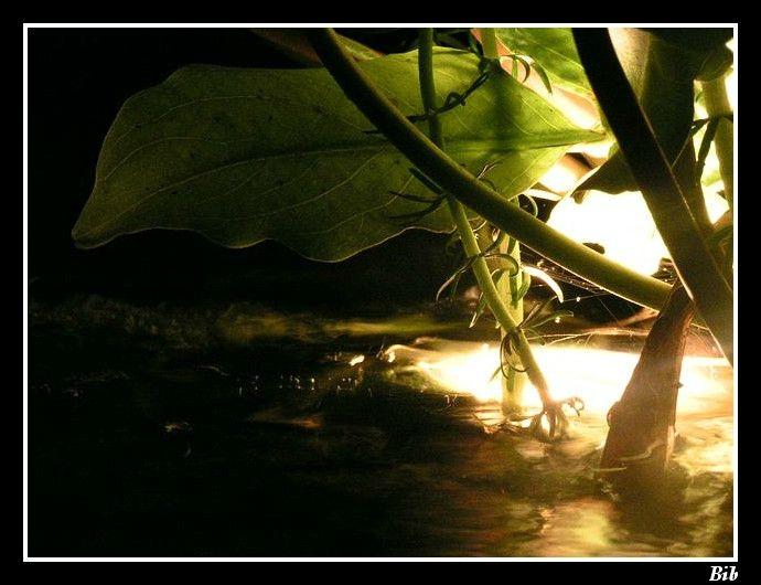 Clairage bassin de jardin mon jardin aquatique for Eclairage bassin