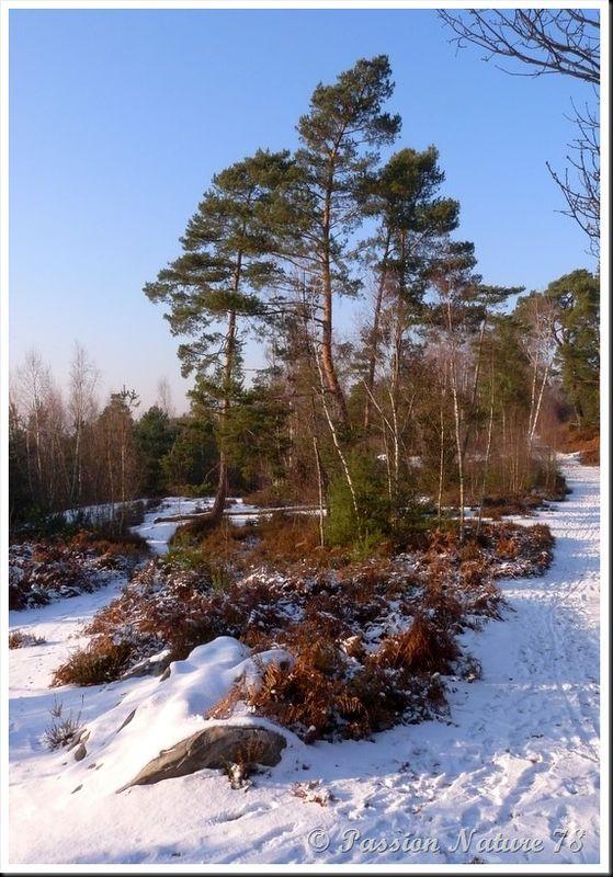 Forêt de Rambouillet sous la neige (17)