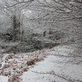 2009 12 17 La neige et la nature (9)