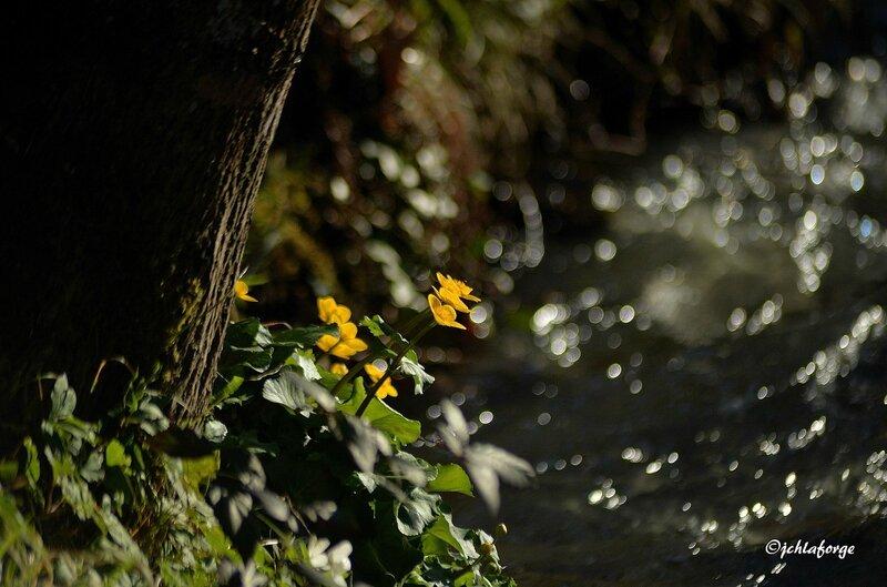 Fleurs de la Bellone 0415 (1)