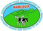 HARLOUP ECUSSON