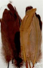 feathers-earth-mix-15-pc_4842_1_G